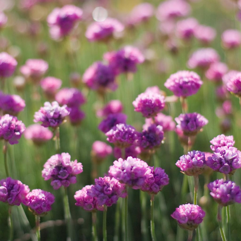Nienazwane kwiatki 2