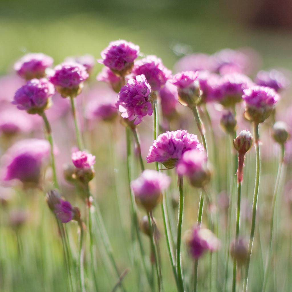 Nienazwane kwiatki 1